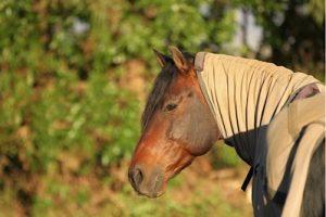 Ekzemerdecke die einfache Hilfe für dein Pferd