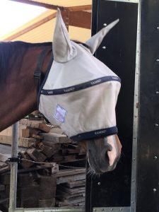 Pferd mit Fliegenhaube für Koppel und Stall